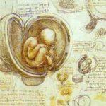 Foetus, dessin de Léonard de Vinci