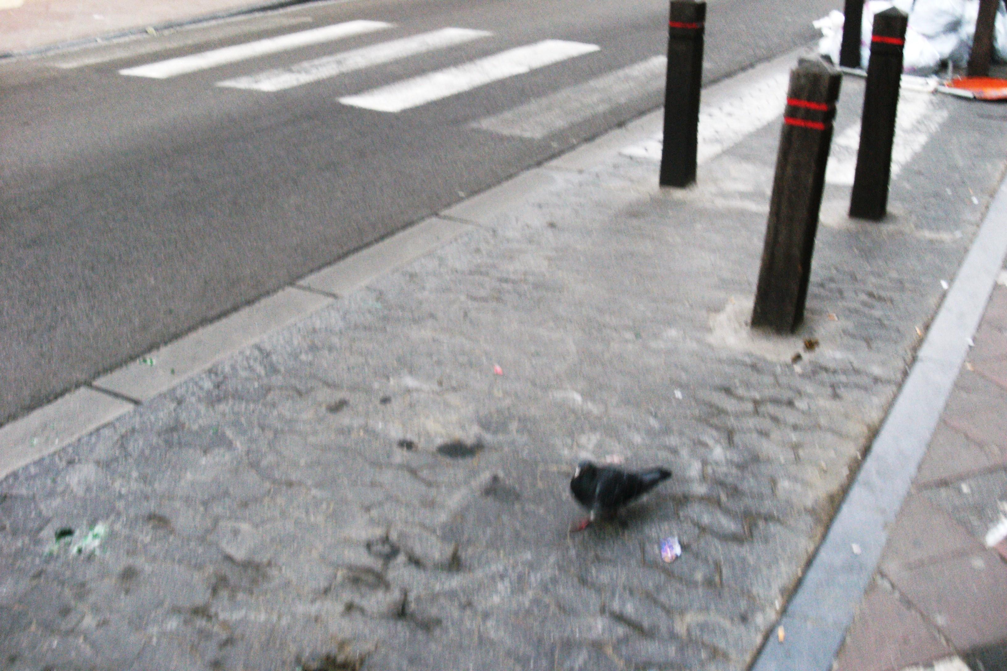 chaussee_d_ixelles_2010_099.jpg